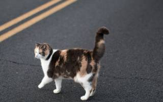 Кошка перешла дорогу, Тайна — это ты