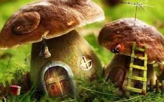 К чему снятся грибы во сне: собирать грибы женщине – сонник