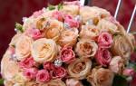 Сонник розовые розы — к чему снится розовые розы во сне?