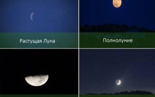 Пересадка комнатных растений по лунному календарю в 2019 году — благоприятные дни для пересадки комнатных растений апреле, мае, июне, июле августе и сентябре месяце
