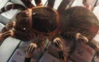 К чему паук ползет вверх: по стене, по паутине, вечером – приметы и суеверия