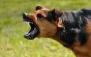 Сонник: напала собака, отбиваться от собак