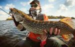 Сонник держать рыбу в руках к чему снится во сне