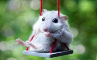 К чему снятся маленькие мышки