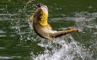 Рыба выпрыгивает из воды – примета