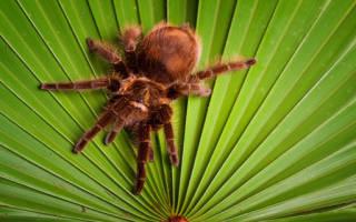 Сонник пауки — как правильно растолковать такое сновидение?