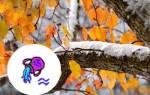 Любoвный гoрoскoп нa Ноябрь 2019: Водолей