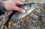 Сонник поймать рыбу руками: женщине, мужчине: большую живую к чему снится видеть во сне