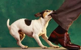Сонник кусает собака к чему снится кусает собака во сне