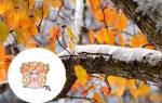 Гороскоп на ноябрь 2019 Дева