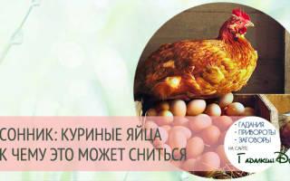 К чему снится много куриных яиц?