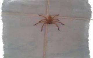 К чему спускается паук перед лицом