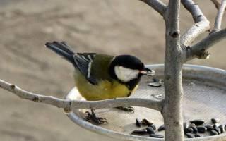 Птица залетела в машину — народные приметы и суеверия