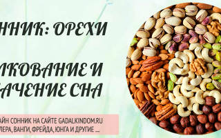 Сонник грецкие орехи во сне к чему снится грецкие орехи