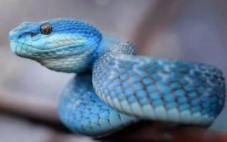 К чему снится убить змею: хорошо ли это