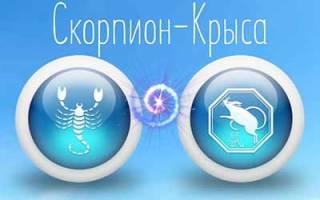 Скорпион-Крыса — все о характере знака, ГОРОСКОПЫ 365