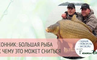 Сонник: большая рыба