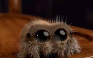Почему нельзя убивать пауков — приметы и поверья