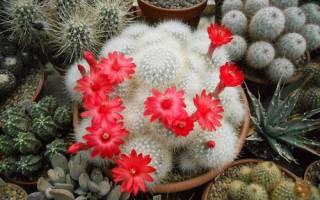 Почему дома нельзя держать кактусы: приметы, поверья, слухи
