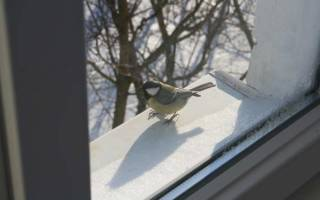 Приметы о белке – увидеть когда перебежала дорогу, забежала в дом, сидит на подоконнике или стучится в окно и другие