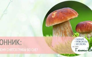 К чему снятся собранные грибы? ГРИБЫ — ПРЕДУПРЕЖДЕНИЕ! Толкование снов с грибами в соннике