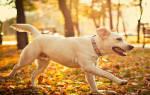 Сонник Белая собака, к чему снится Белая собака женщине, что означает увидеть Белую собаку во сне — толкование снов бесплатно