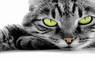 К чему снится кошка Сонник Миллера, что означает сон, в котором приснилось кошка