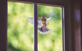 Приметы про залетевшую птицу в окно