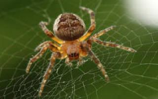 Приметы про пауков – что обещает нам встреча с восьмилапыми созданиями?
