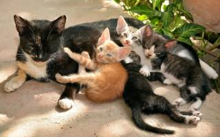 К чему снится кошка с котятами женщине: сонник