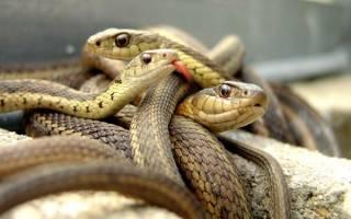 К чему снится сон змеи?