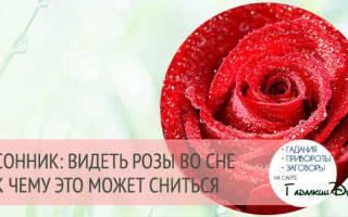 Сонник: к чему снятся розы (красные, белые)