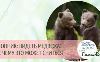 К чему снится медвежонок женщине?