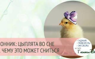 Сонник, к чему снятся цыплята: маленькие, живые, цыплята во сне женщине
