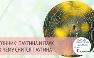 Сонник, к чему снится паутина: черная, белая, пауки и паутина во сне