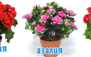 Комнатные цветы по знакам зодиака, с фото для женщин