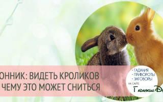 Сонник, к чему снятся кролики: женщине, мужчине, белый кролик во сне