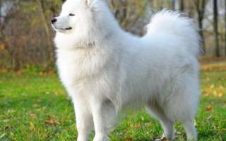 Сонник белая собака к чему снится белая собака во сне