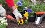 Что предвещает сажать цветы во сне?